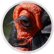 Hornbill Closeup Round Beach Towel by David Salter