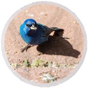 Indigo Bunting Round Beach Towel by Jon Woodhams