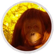 It Is Hard Being A Primate  Round Beach Towel by Jeff Swan