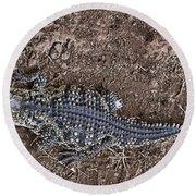 Juvenile African Crocodile Round Beach Towel by Douglas Barnard