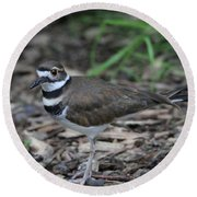 Killdeer Round Beach Towel by Dan Sproul