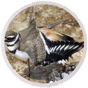 Killdeer Fakeout Round Beach Towel by Shane Bechler