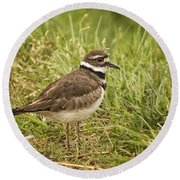 Killdeer Round Beach Towel by Priscilla Burgers