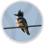 Kingfisher Profile Round Beach Towel by Mike Dawson
