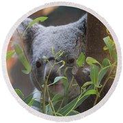 Koala Bear  Round Beach Towel by Dan Sproul