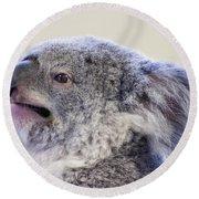 Koala Close Up Round Beach Towel by Chris Flees