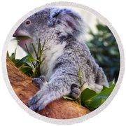 Koala Eating In A Tree Round Beach Towel by Chris Flees