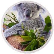 Koala On Top Of A Tree Round Beach Towel by Chris Flees