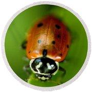 Ladybug On Green Round Beach Towel by Iris Richardson