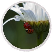 Ladybugs On Shasta Daisy Round Beach Towel by Sharon Talson