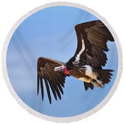 Lappetfaced Vulture Round Beach Towel by Johan Swanepoel