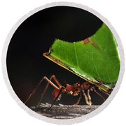 Leafcutter Ant Round Beach Towel by Francesco Tomasinelli