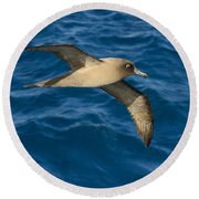 Light-mantled Sooty Albatross Round Beach Towel by Tony Beck