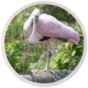 Light Pink Roseate Spoonbill Round Beach Towel by Carol Groenen