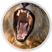 Lion Round Beach Towel by Johan Swanepoel