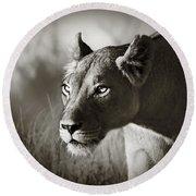 Lioness Stalking Round Beach Towel by Johan Swanepoel