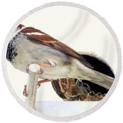 Little Sparrow Round Beach Towel by Karen Wiles