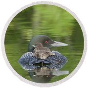 Loon Chicks -  Nap Time Round Beach Towel by John Vose