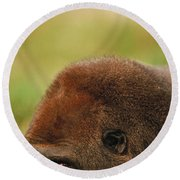 Lowland Gorilla Round Beach Towel by Mark Newman