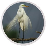 Majestic Great Egret Round Beach Towel by Bob Christopher