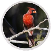 Male Northern Cardinal Round Beach Towel by Gary Langley