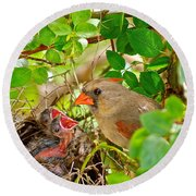 Mama Bird Round Beach Towel by Frozen in Time Fine Art Photography