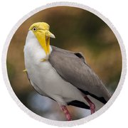 Masked Lapwing Round Beach Towel by Carolyn Marshall