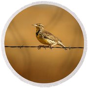 Meadowlark And Barbed Wire Round Beach Towel by Robert Frederick