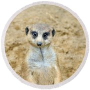 Meerkat Round Beach Towel by Aimee L Maher Photography and Art Visit ALMGallerydotcom