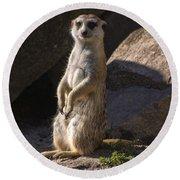 Meerkat Looking Forward Round Beach Towel by Chris Flees
