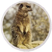 Meerkat On Hill Round Beach Towel by Pixel Chimp