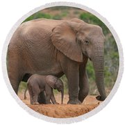 Mother And Calf Round Beach Towel by Bruce J Robinson