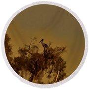 Nesting Jabiru  Round Beach Towel by Douglas Barnard