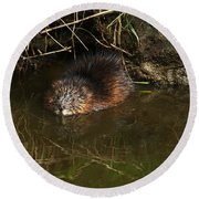 North American Beaver Round Beach Towel by Sharon Talson