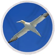 Northern Gannet Round Beach Towel by Tony Beck
