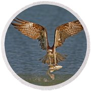 Osprey Morning Catch Round Beach Towel by Susan Candelario