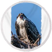 Osprey Surprise Party Card Round Beach Towel by Edward Fielding