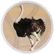 Ostrich Round Beach Towel by Johan Swanepoel