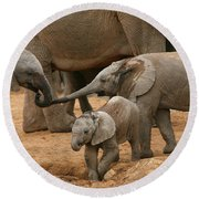 Pachyderm Pals Round Beach Towel by Bruce J Robinson