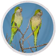 Pair Of Monk Parakeets Myiopsitta Round Beach Towel by Panoramic Images