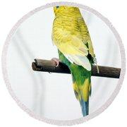 Parakeet Round Beach Towel by Aaron Haupt