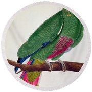 Parrot Round Beach Towel by Francois Nicolas Martinet