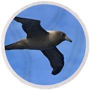 Pelagic Seabird... Round Beach Towel by Nina Stavlund