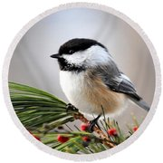 Pine Chickadee Round Beach Towel by Christina Rollo
