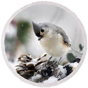 Playful Winter Titmouse Round Beach Towel by Christina Rollo