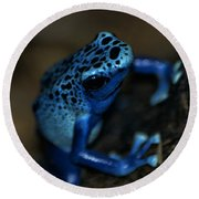 Poisonous Blue Frog 02 Round Beach Towel by Thomas Woolworth