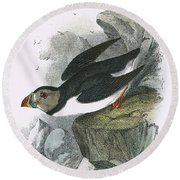 Puffin Round Beach Towel by English School
