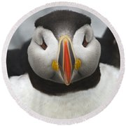 Puffin It Up... Round Beach Towel by Nina Stavlund