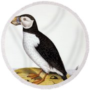 Puffin, Marmon Fratercula, Circa 1840 Round Beach Towel by French School