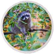 Raccoon Round Beach Towel by Inge Johnsson